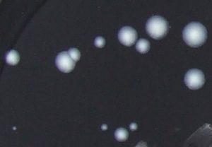 Legionella 2007,03,11 016